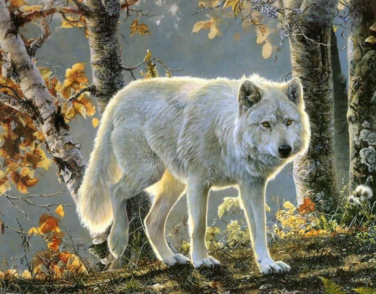Rompecabezas Recoger rompecabezas en línea - White wolf