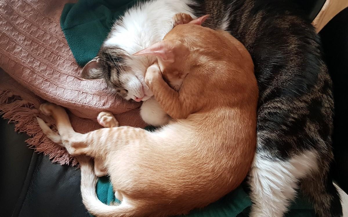 Rompecabezas Recoger rompecabezas en línea - Two cats