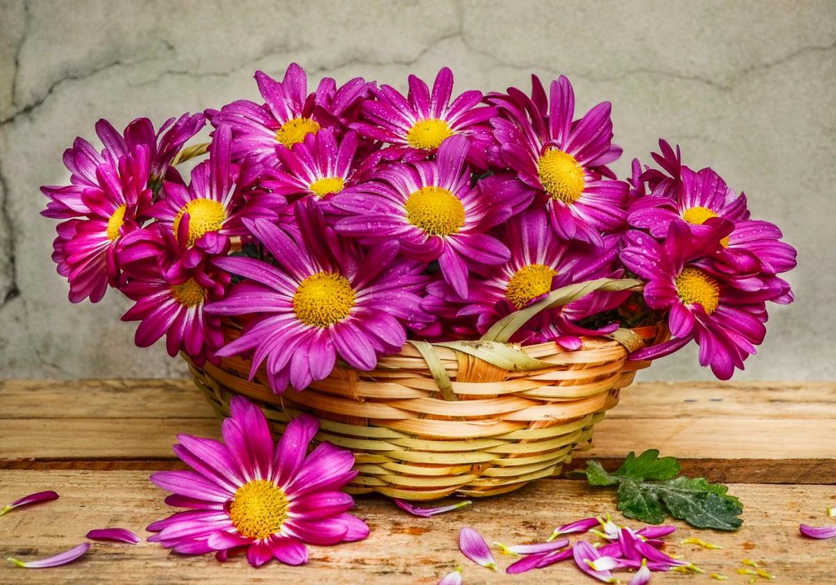 Rompecabezas Recoger rompecabezas en línea - Chrysanthemums in a basket