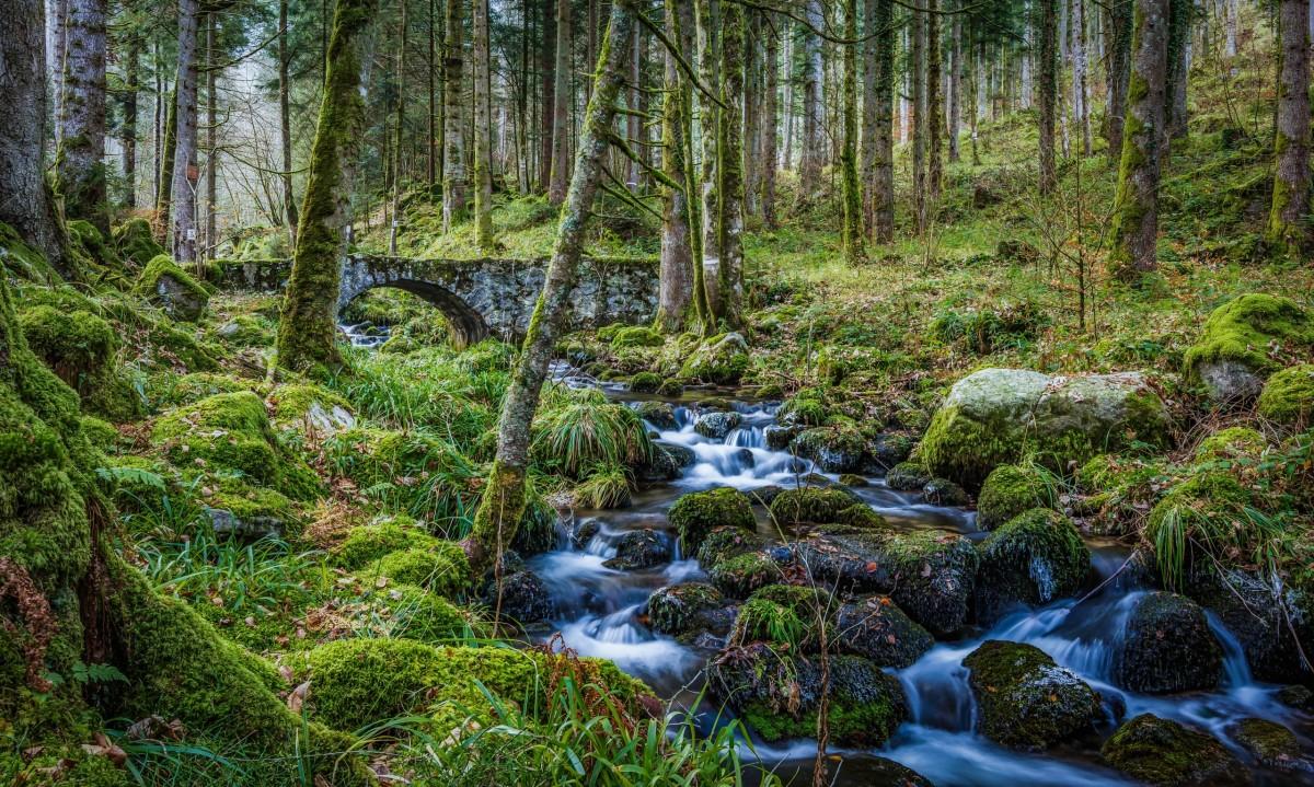 Rompecabezas Recoger rompecabezas en línea - Stone bridge in the forest