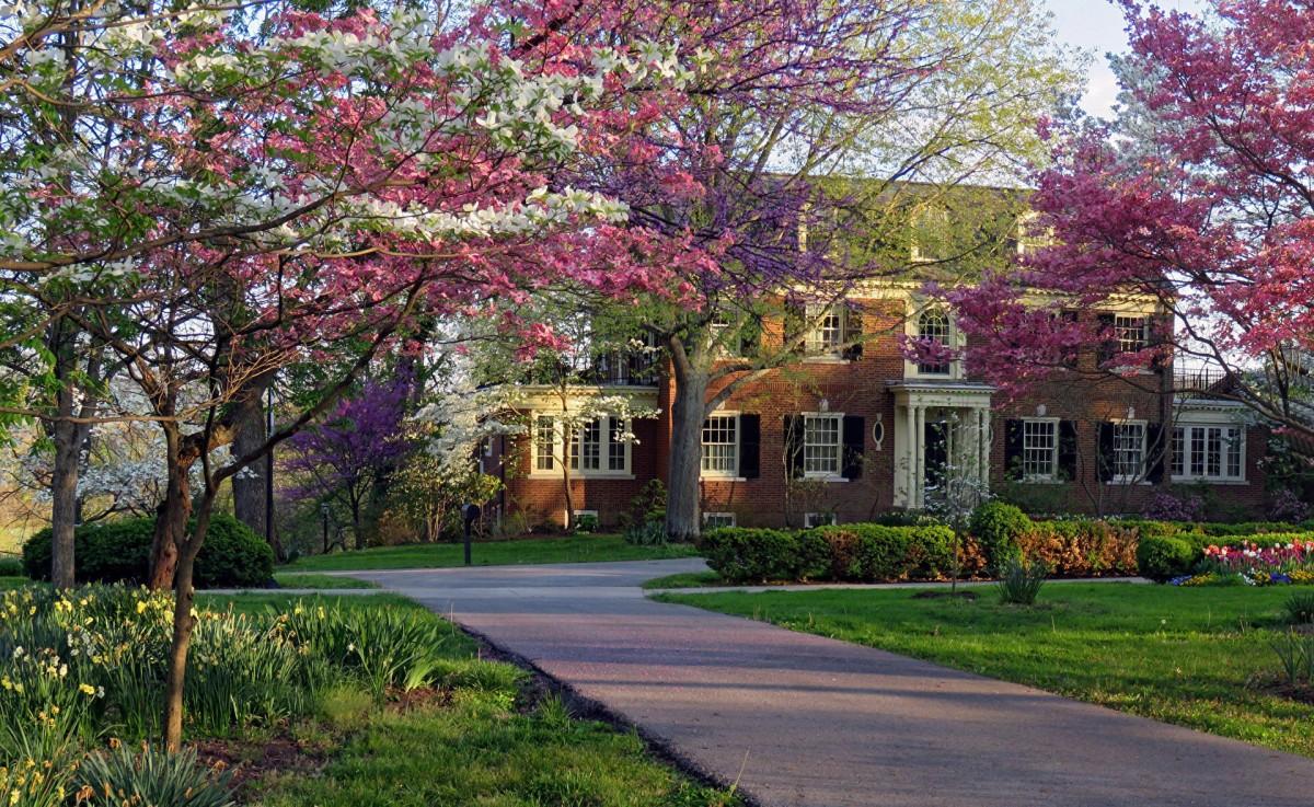 Rompecabezas When magnolia blooms