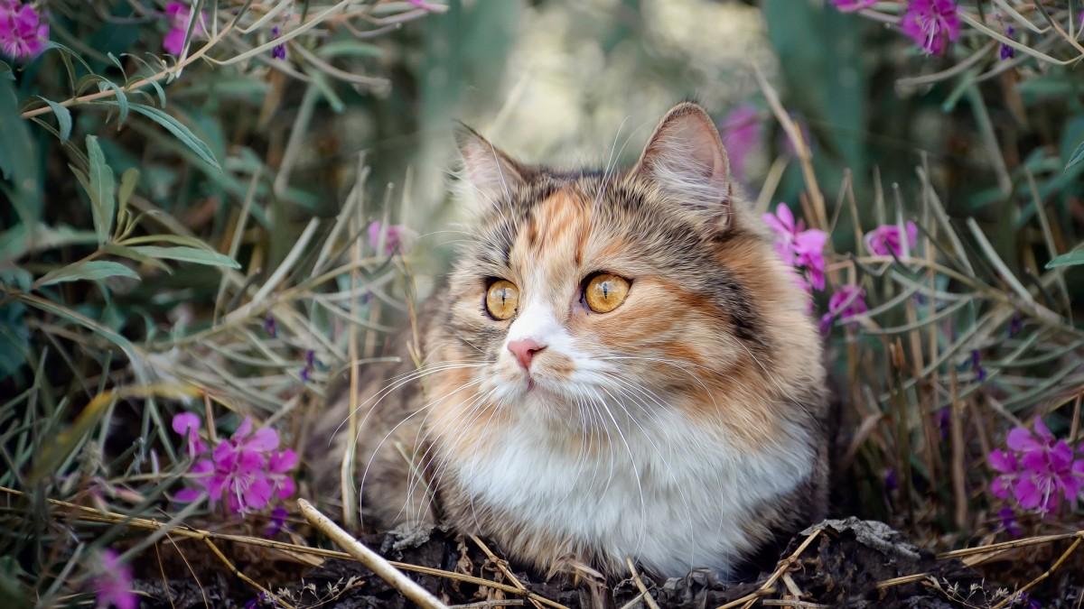 Rompecabezas Recoger rompecabezas en línea - Cat in flowers