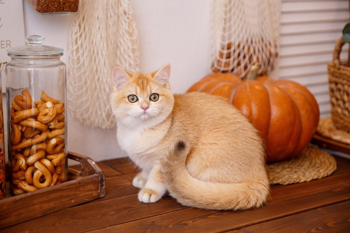 Rompecabezas Recoger rompecabezas en línea - Cat