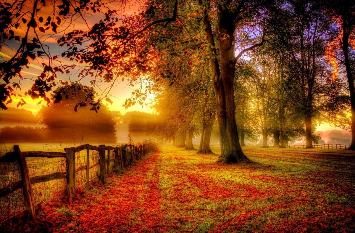 Rompecabezas Recoger rompecabezas en línea - Autumn fence