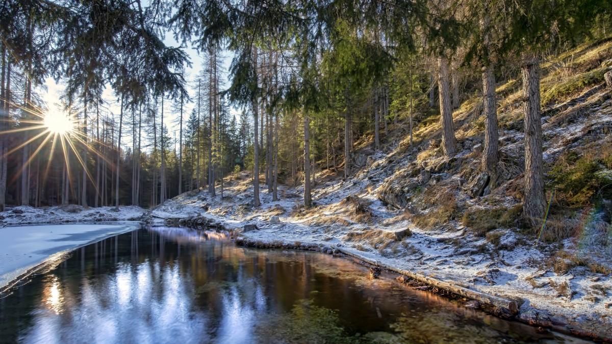 Rompecabezas Recoger rompecabezas en línea - First snow in the woods
