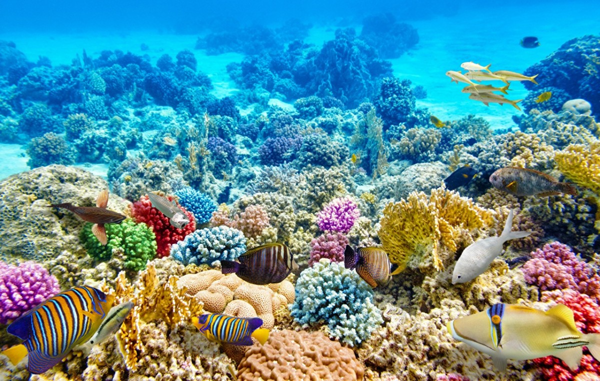 Rompecabezas Recoger rompecabezas en línea - Underwater world