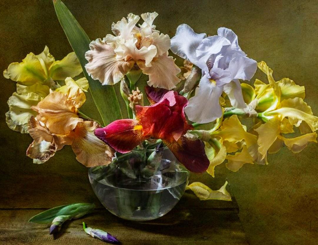 Rompecabezas Recoger rompecabezas en línea - Colored irises