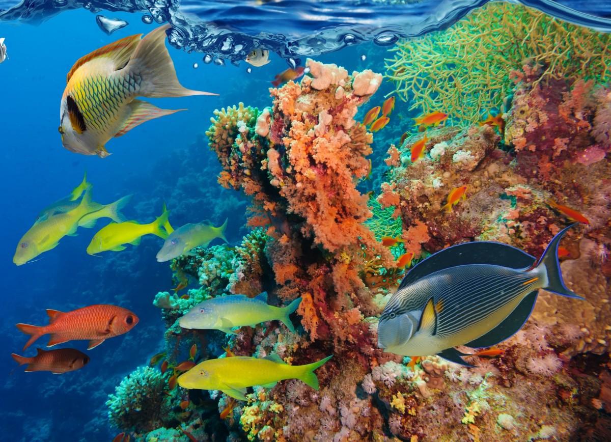 Rompecabezas Recoger rompecabezas en línea - Fish and corals