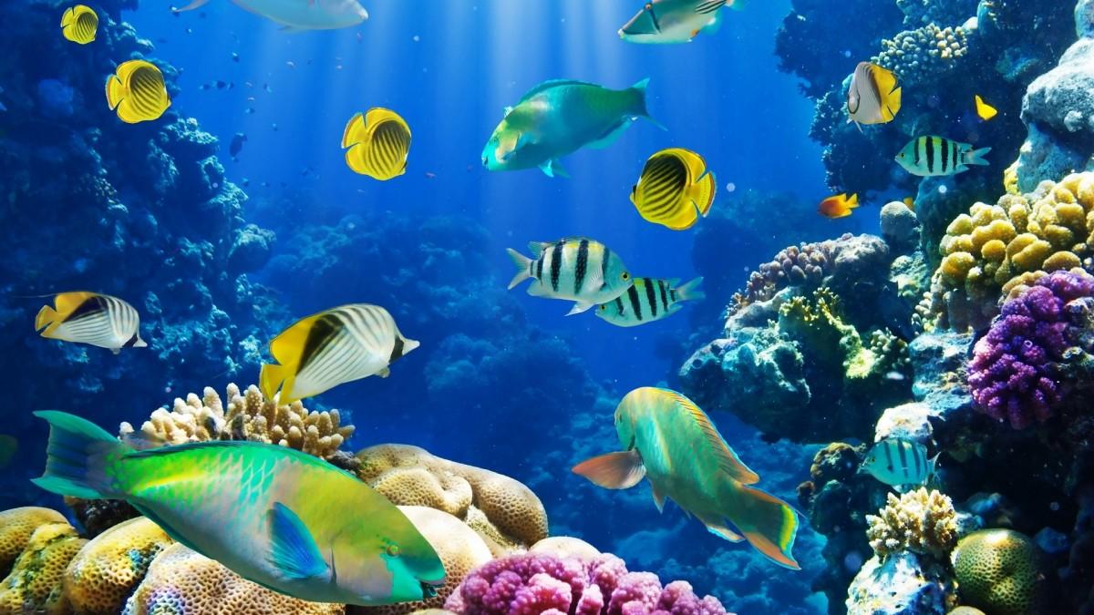Rompecabezas Recoger rompecabezas en línea - Fish under water
