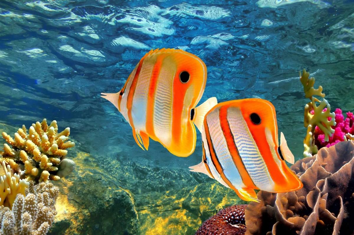 Rompecabezas Recoger rompecabezas en línea - Fish in the ocean