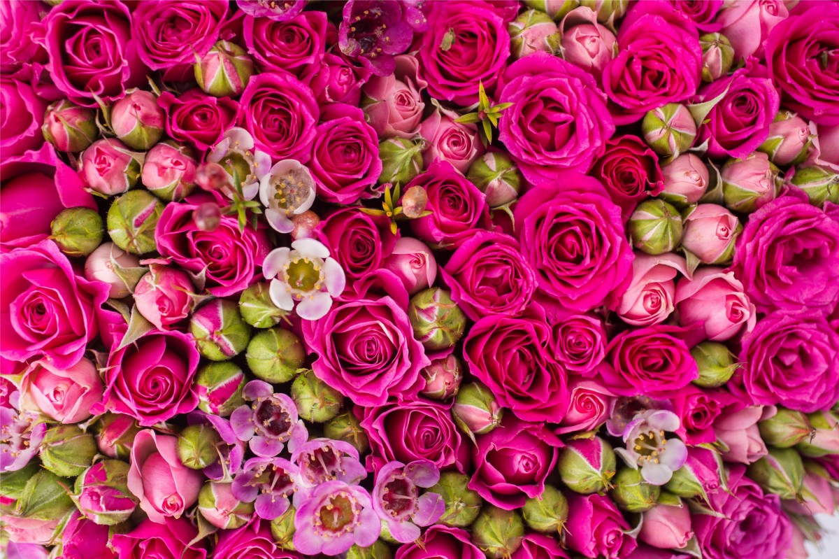 Rompecabezas Recoger rompecabezas en línea - Roses