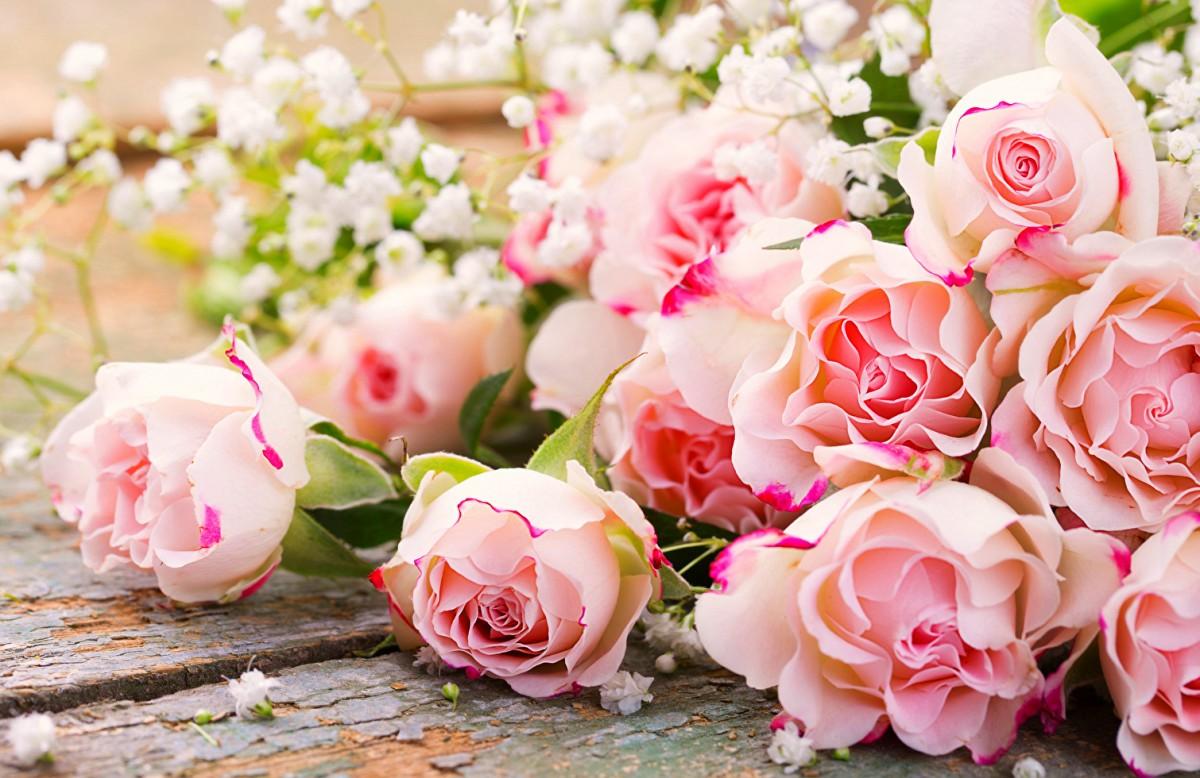Rompecabezas Recoger rompecabezas en línea - Roses and gypsophila