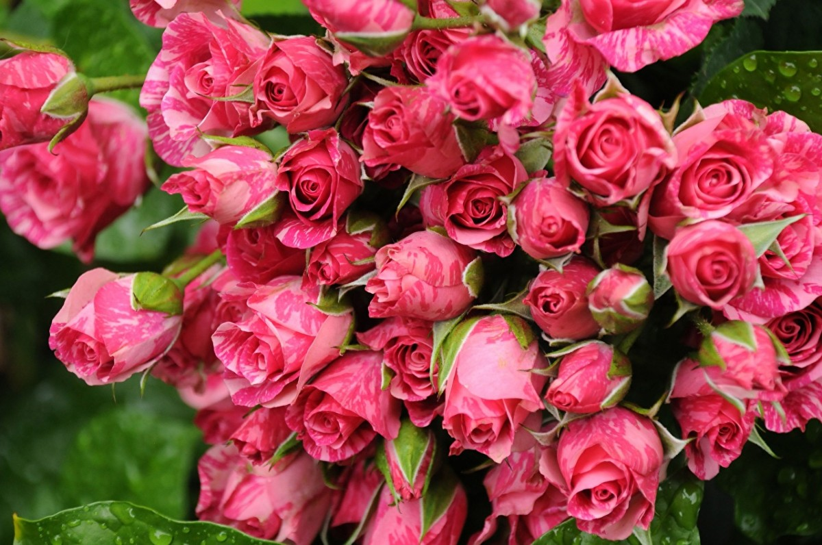 Rompecabezas Recoger rompecabezas en línea - Pink bouquet