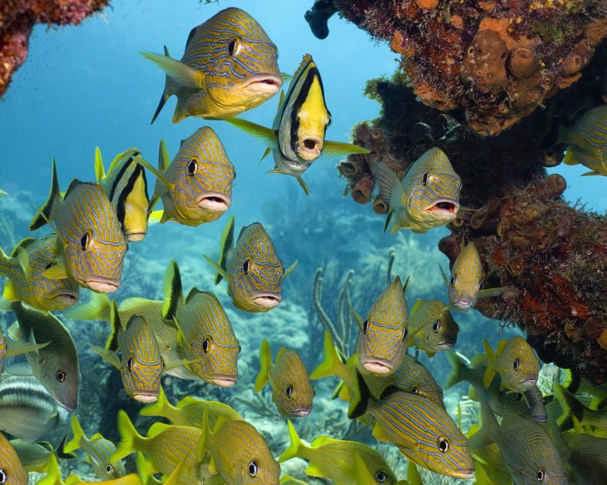 Rompecabezas Recoger rompecabezas en línea - A flock of fish