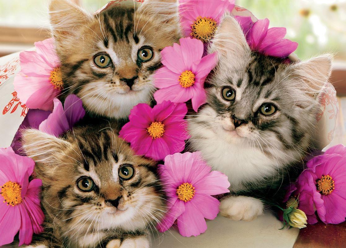 Rompecabezas Recoger rompecabezas en línea - Three kittens