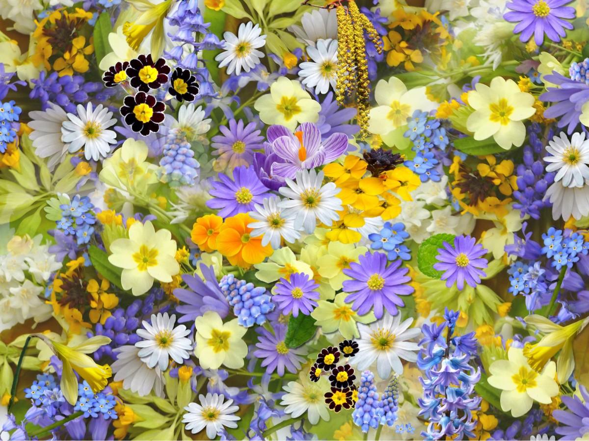 Rompecabezas Recoger rompecabezas en línea - Spring flowers