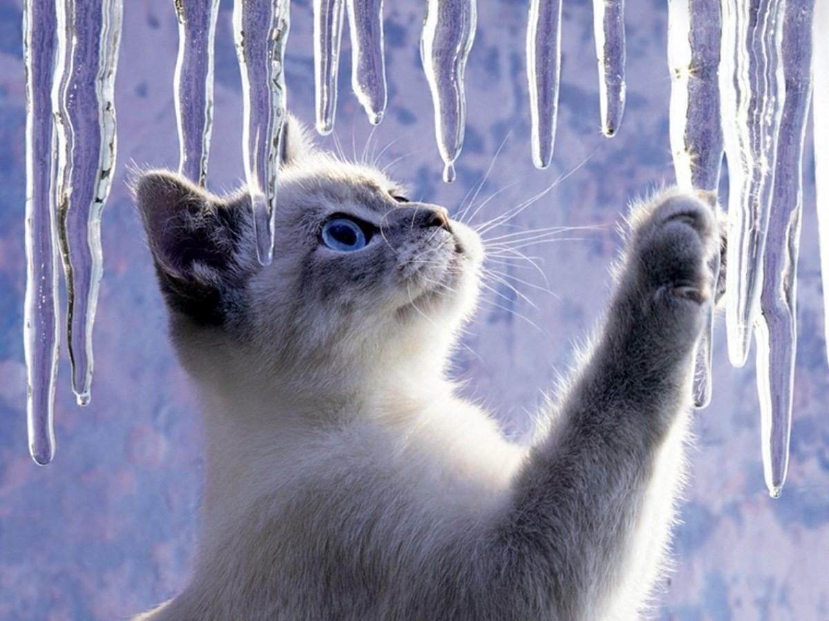 Rompecabezas Recoger rompecabezas en línea - Spring thaw