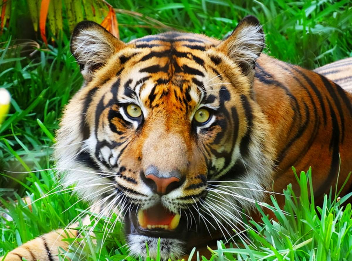 Rompecabezas Recoger rompecabezas en línea - Eyes of a predator