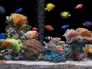 Собирать пазл Akvarium 1 онлайн