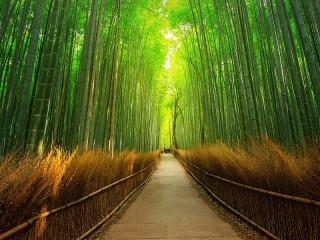 Собирать пазл Bamboo forest онлайн