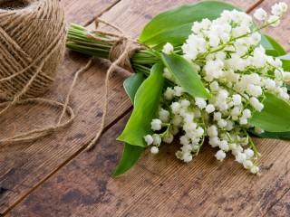 Собирать пазл White lily of the valley онлайн