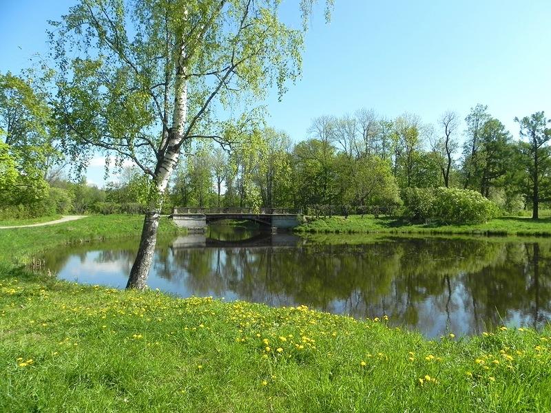 Rompecabezas Recoger rompecabezas en línea - Birch pond