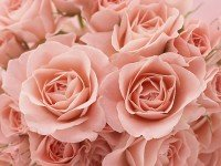 Собирать пазл buket rozovih roz онлайн