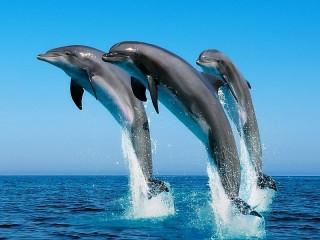 Собирать пазл Delfini онлайн