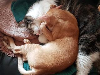 Собирать пазл Two cats онлайн