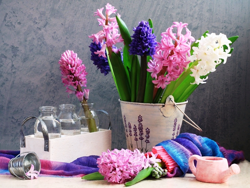 Rompecabezas Recoger rompecabezas en línea - Hyacinths