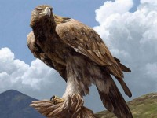 Собирать пазл Proud bird онлайн