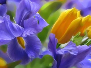 Собирать пазл Irisi онлайн
