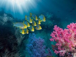 Собирать пазл Coral reef онлайн