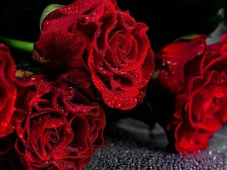 Собирать пазл Red roses онлайн