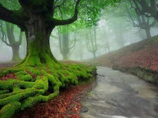 Собирать пазл Forest in the fog онлайн