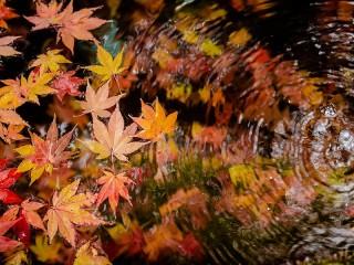 Собирать пазл The leaves on the water онлайн