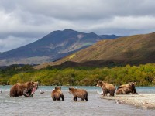 Собирать пазл Bears fishing онлайн