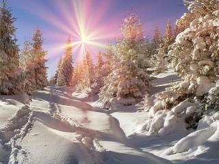 Собирать пазл Frost and sun онлайн