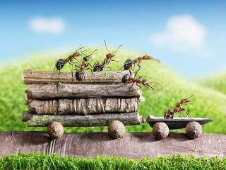 Собирать пазл Ants are hardworking онлайн