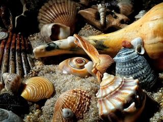 Собирать пазл On the sea shore онлайн