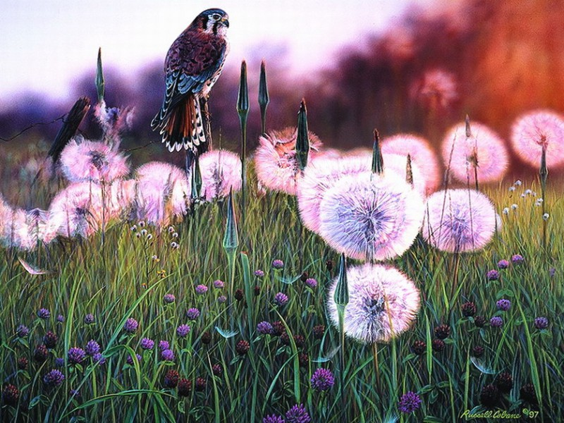 Rompecabezas Recoger rompecabezas en línea - Dandelions and bird