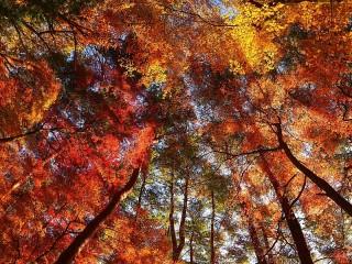 Собирать пазл Autumn crown онлайн