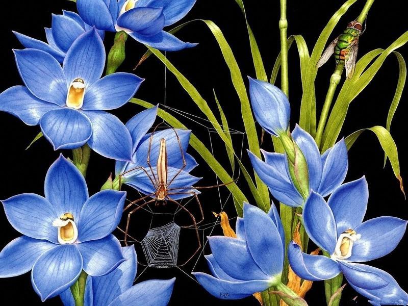 Rompecabezas Recoger rompecabezas en línea - Spider-web on flowers