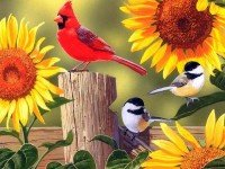 Собирать пазл Singing birds онлайн