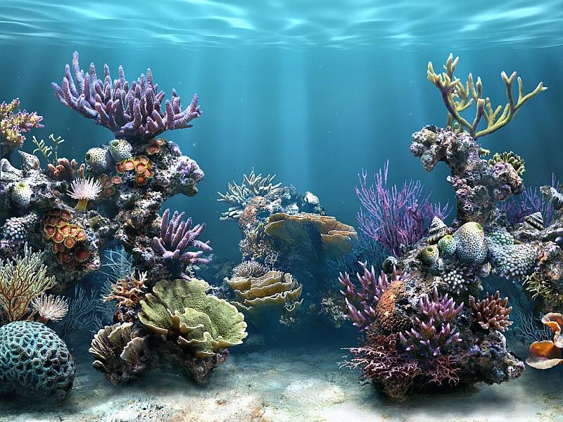 Rompecabezas Recoger rompecabezas en línea - Under the water