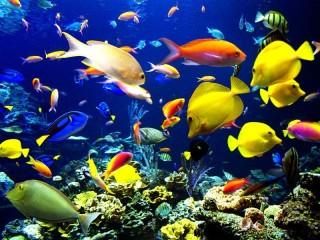 Собирать пазл The underwater world 2 онлайн