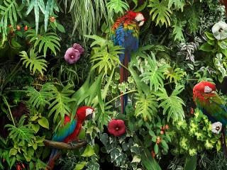 Собирать пазл Parrots among the flowers онлайн