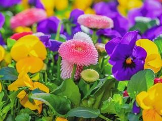 Собирать пазл Colorful flower garden онлайн