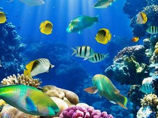 Собирать пазл Fish under water онлайн