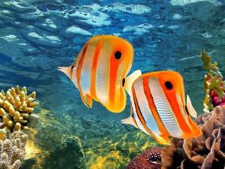 Собирать пазл Fish in the ocean онлайн
